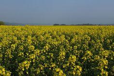 Scotland Declares Freedom From GMOs | TakePart
