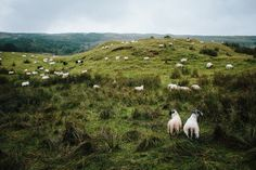 West Highland Way – Teil — Reisebericht von Mario Taferner West Highland Way, Mario, Hiking, Adventure, Animals, Travel Report, Travel, Pictures, Walks