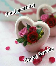 Have a blessed sunday . visit bulkq for more images Sunday Gif, Happy Sunday Images, Good Morning Sunday Images, Sunday Wishes, Good Morning Love Messages, Sunday Greetings, Good Morning Happy Sunday, Happy Sunday Quotes, Good Morning Prayer