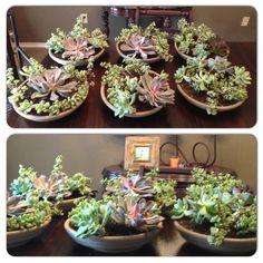 Cactus center pieces