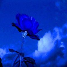 Imagenes De Rosas Azules