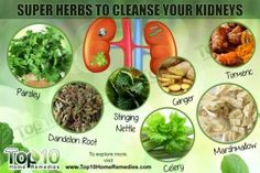 Top 10 Super Herbs to Cleanse Your Kidneys