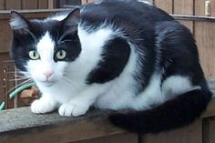 How to Keep Stray Cats Out of Your Yard (9 Steps) | eHow