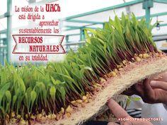 La misión de la UACh está dirigida a aprovechar sustentablemente los recursos naturales en su totalidad. SAGARPA SAGARPAMX #SOMOSPRODUCTORES