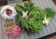 Comment cuisiner son panier amap 16 vegan c 39 est l - Comment cuisiner les haricots rouges ...