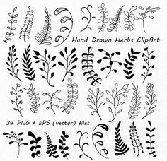 Flower Doodles Discover Hand Drawn Herbs Clipart Leaves clip art Herbs Silhouette PNG EPS AI Vector Laurel Clipart Personal and Commercial Use Doodles Zentangles, Zentangle Patterns, Embroidery Patterns, Embroidery Ideas, Easy Zentangle, Flower Embroidery, Grass Silhouette, Silhouette Png, Doodle Drawings