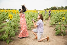 A surprise proposal in the Sunflower fields. Proposal Photography, Surprise Proposal, Sunflower Fields, My Photos, Dresses, Fashion, Vestidos, Moda, La Mode