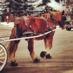 ASPEN carriage ride. Photo by tonsing