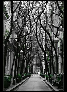 Streets in Barcelona hold some of the most natural beauty. #nature #beauty #Barcelona