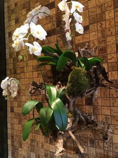 44 Perfect Hanging Orchids Ideas For Decorating House Hanging Plants Outdoor, Outdoor Wreaths, Diy Hanging, Indoor Plants, Porch Garden, Indoor Garden, Hanging Orchid, Orchid Roots, Orchid Seeds