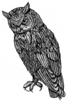 owl by french