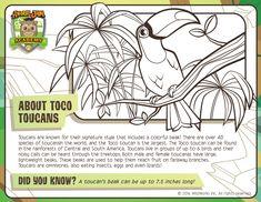 Animal Jam Aquarium Coloring Page Animal Jam Birthday