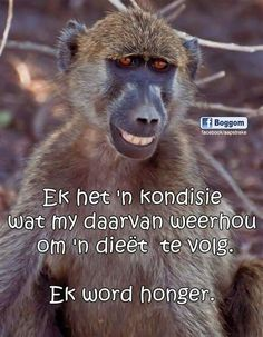 Ek het 'n kondisie wat my daarvan weerhou om 'n dieet te volg . Witty Quotes Humor, Cute Quotes, Great Quotes, Qoutes, Lekker Dag, Family Rules Sign, Afrikaanse Quotes, Love My Sister, Bible Prayers