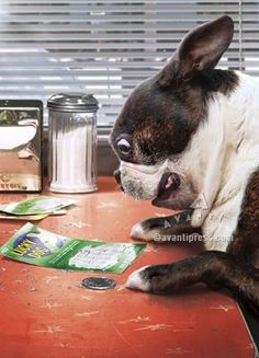 """I won, I think big time too!"" #dogs #pets #BostonTerriers Facebook.com/sodoggonefunny"