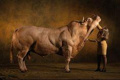 toros cementales
