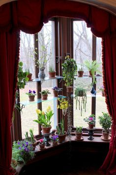 Window shelves...would be nice.....not the heavy drapes, but the shelves.