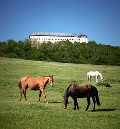 The Červený Kameň Castle - Slovakia.travel