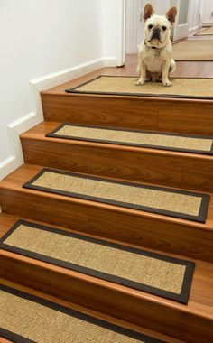 Pet Stair Treads. Available ready to ship in standard sizes and custom made in more than 40 different types of sisal, seagrass, montain grass natural fiber carpet. Please visit: www.naturalarearugs.com