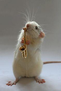Orquesta de Ratas  mini  animales  cute