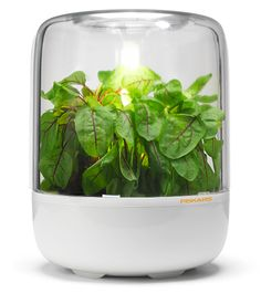 Fiskars KitchenGarden is a Mini-Greenhouse for Herbs and is adorable fit in your home. An innovative approach to home gardening. Herb Garden Kit, Herb Garden In Kitchen, Water Garden, Home And Garden, Hospital Design, Mini Greenhouse, Herbs Indoors, Growing Herbs, Red Dots