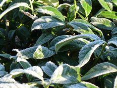 Pflanzen in der Winterzeit