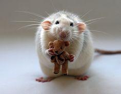 15 animaux trop cutes pour être vrais