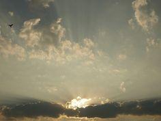 Sunrise_Bird_2