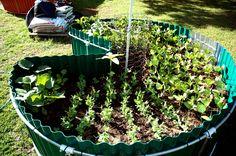 KEYHOLE GARDENS — KEY TO THE FUTURE A garden that feeds itself