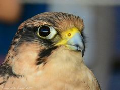 Hawk 09 2014