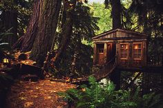 Treehouse Point in Snoqualmie, WA