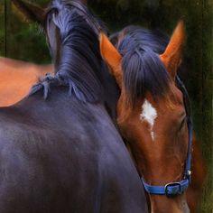I love you! #horses