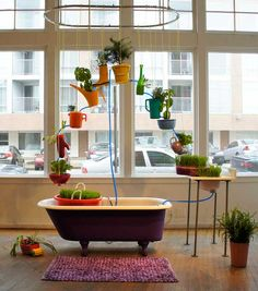 Aquaponics as art.  (cc licensed ( BY NC SA ) flickr photo by amymyou: http://flickr.com/photos/amymyou/5737616420/)