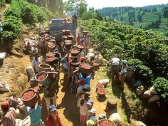 Coffee pickers at a coffee plantation... This reminds me so much of my childhood ;)