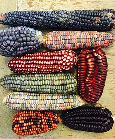 "Culinary Breeding Network on Instagram: ""Beautiful diversity in corn. Photo credit: @explorewithjoseph"""