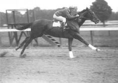 Iconic: Man O'War, thought to be one of the greatest thoroughbreds of all time, won 20 of his 21 races.