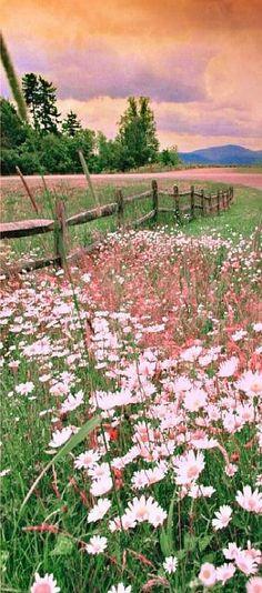 24 Ideas Flowers Photography Nature Wildflowers Beautiful For 2019 Landscape Photography, Nature Photography, Photography Flowers, Summer Photography, Landscape Art, Photography Aesthetic, Landscape Paintings, Landscape Design, Beautiful Places