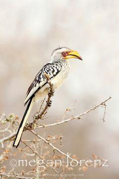 Bird, South Africa  - mlorenzphotography