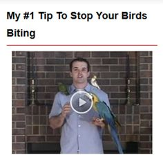 """Cuidado ! Não deseje ter uma arara , papagaio , tuim ou qualquer destes animais . A exportação é proíbida e o """"assalto"""" aos ninhos está dizimando a espécie ."""