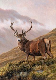 Stock Illustration : Red deer stag in upland landscape Wildlife Paintings, Wildlife Art, Animals Beautiful, Cute Animals, Deer Photography, Big Deer, Deer Photos, Deer Art, Pet Birds