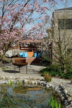 Blick über den kleinen Naturbadeteich zur Zierkirsche Prunus 'Accolade'. Prunus, Garden, Pond, Cherries, Nature, Garten, Gardens, Peach, Cherry