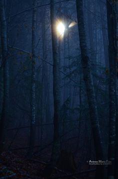 Hoffnung... 01.11.2013 Aufstieg auf den Mittagskogl Nostalgia, In This Moment, Celestial, Photos, Outdoor, Longing For You, Outdoors, Pictures, Outdoor Games