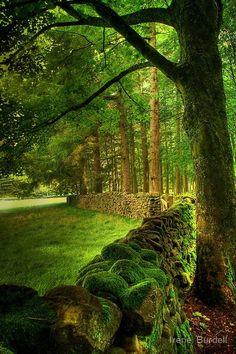 Antiga Cerca de pedra, Lancashire, Inglaterra