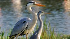 Oiseaux Camargue -                                          ..www.avignon-et-provence.com
