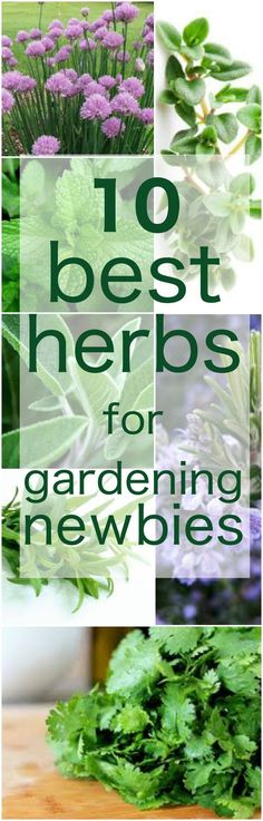 Herbs are delicious and super healthy for you. Grow your own, especially these 10 herbs, which are easy to grow. #gardening #herbs #healthyfood