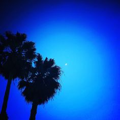Moon and Palm Trees at Dusk.  Two nights ago I took this picture while picking up my daughter at camp in Orange California.  It was a beautiful vista to share! #fatherdaughter #travellocal #itookthispic #orangecountyca #orangecalif #cityoforange #orangeca #sky #trees #silouette #palmtrees #california #nightsky #trees #tree #nightsky #crescentmoon #moon #moon #travelspiritually #findbeautywhereyouare #outplanettravel