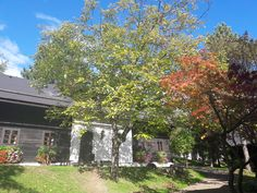 Herbststimmung im Naturel Hoteldorf SCHÖNLEITN. Ist das nicht wunderbar? Cabin, House Styles, Home Decor, Vacation, Decoration Home, Room Decor, Cabins, Cottage, Home Interior Design