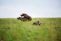 Missing the action: Greg Armfield, who was visiting the Nairobi National Park during a lio...
