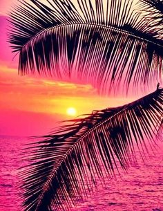 """🌟Tante S!fr@ loves this📌🌟passionplenty: """" Palm trees and ocean at sunset, Hawaii by John Warden on Getty Images """" Beautiful Sunset, Beautiful World, Beautiful Places, Simply Beautiful, Art Sur Toile, Belle Photo, Pretty Pictures, Amazing Pictures, Nature Photography"""