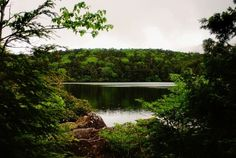 """Check out my art piece """"Forest and lake"""" on crated.com"""