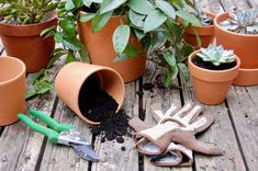 All the Signs That It's Time To Repot Your Plant on Food52 Garden Plants, Indoor Plants, Reap What You Sow, Buy Plants Online, Sandy Soil, Plant Needs, Cool Plants, Cacti And Succulents, Garden Tools